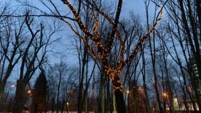 Дерево желаний_парк Гагарина