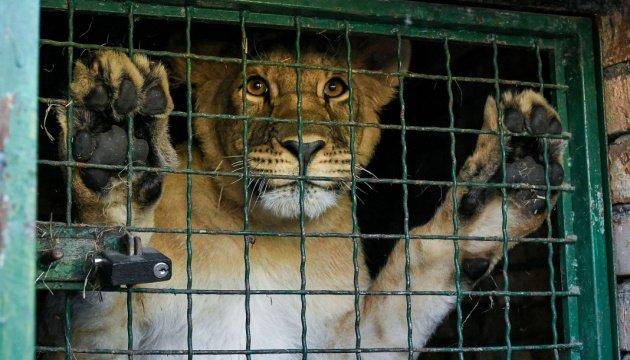 леви з бердянського зоопарку