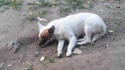 В Днепре ищут дом собачке с необычным окрасом (Фото)