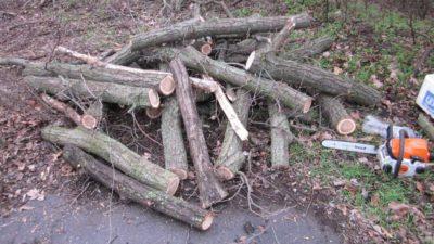 у Кривому Розі вирубували дерева