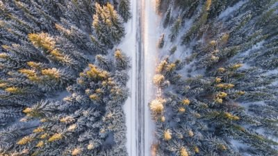 зима деревья
