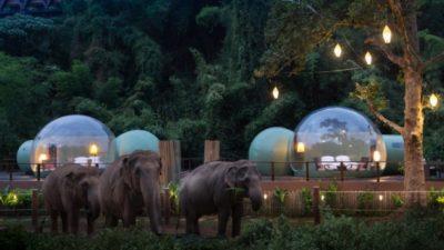 У Таїланді туристи можуть переночувати в компанії зі слонами