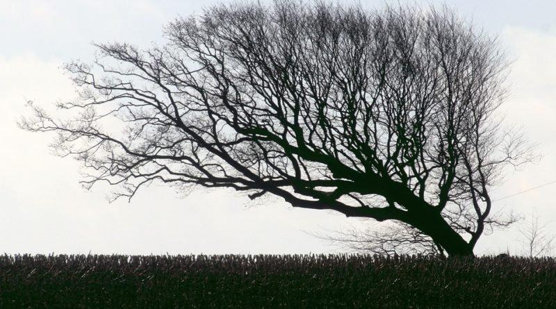 дерево ветер
