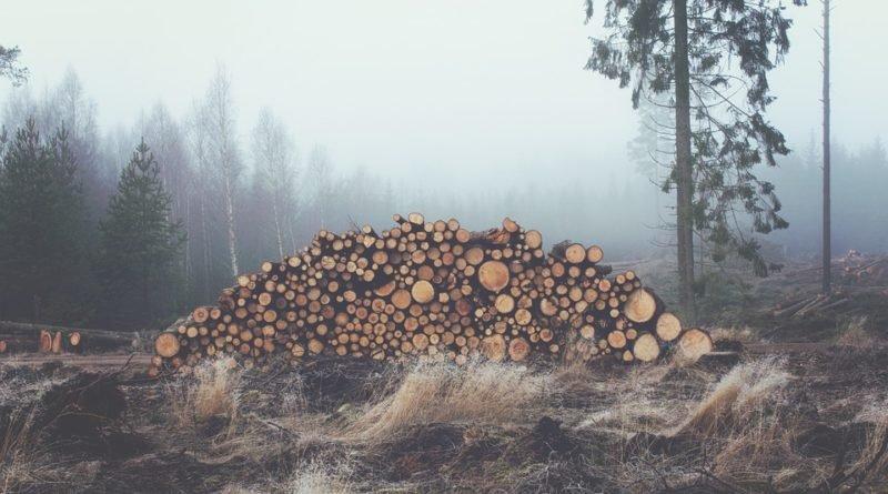 дрова дерево