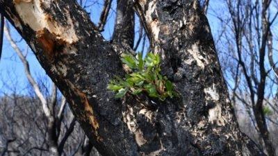 природа_пожежа в Австралії