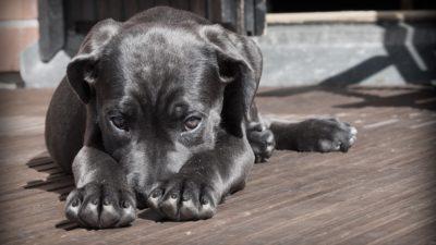 собака днепр