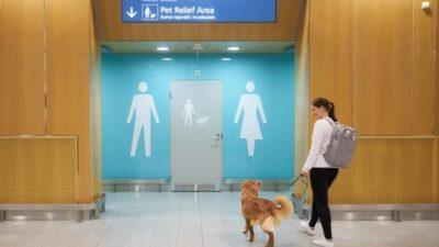 туалеты для питомцев