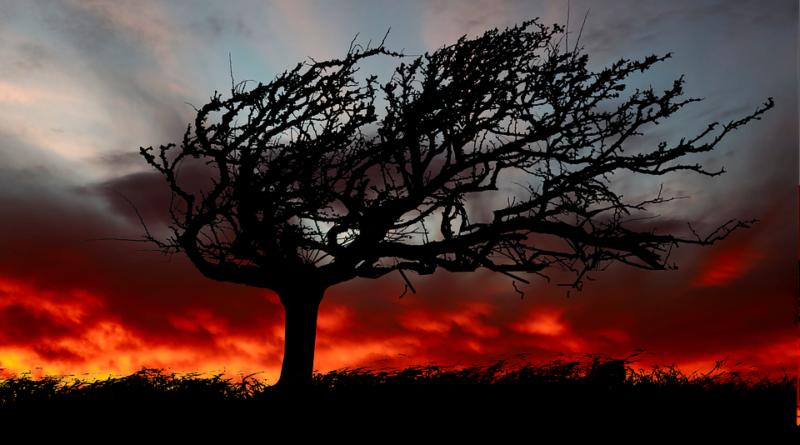 ветер погода деревья