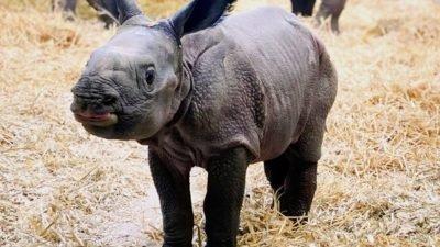 носорог_зоопарк Денвер