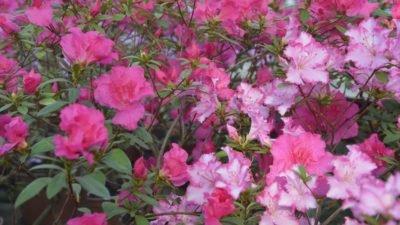 На Дніпропетровщині ботанічний сад зустрічав закохані пари (Фото)
