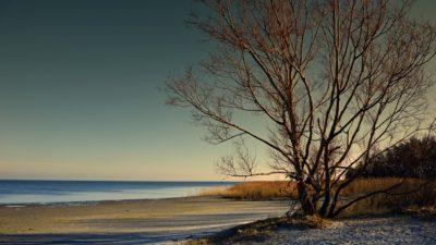 пляж деревья