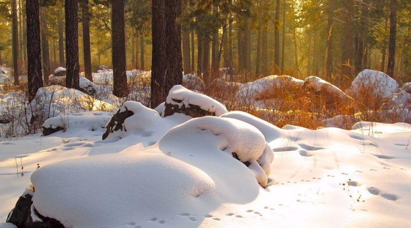 природа зима