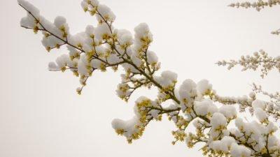 цветы зима