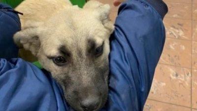 У Дніпрі волонтери продовжують рятувати тварин після ДТП