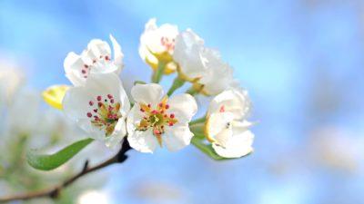 весна цвети