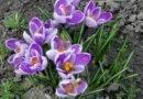 днепр погода цветы