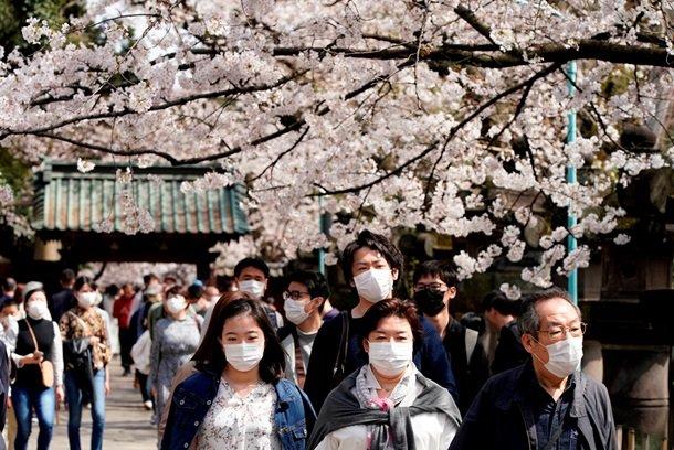 цветение сакур_Япония