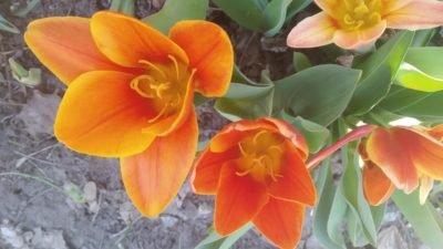 В Днепре ботанический сад утопает в цветах (Фото)