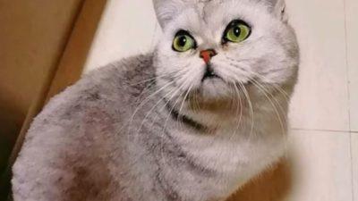 кошка из Уханя