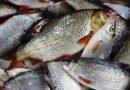 риба улов