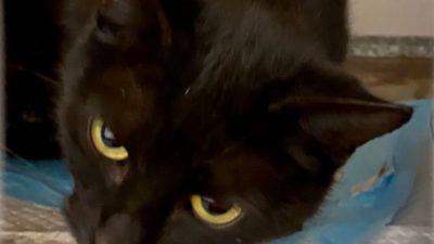 соня кошка