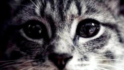 В Днепре животное приползло к волонтерам за помощью (Фото)
