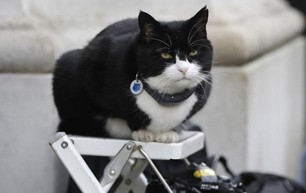 кот британского МИД