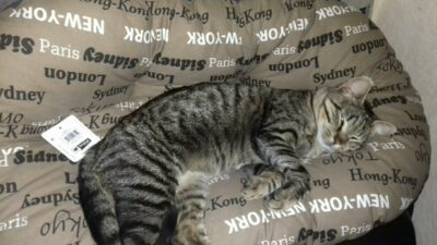 В Днепре кот с необычным именем ищет дом (Фото)