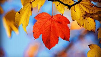 Прохладный октябрь и теплый ноябрь — синоптик сделал прогноз на осень