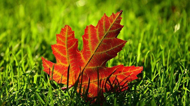 осень