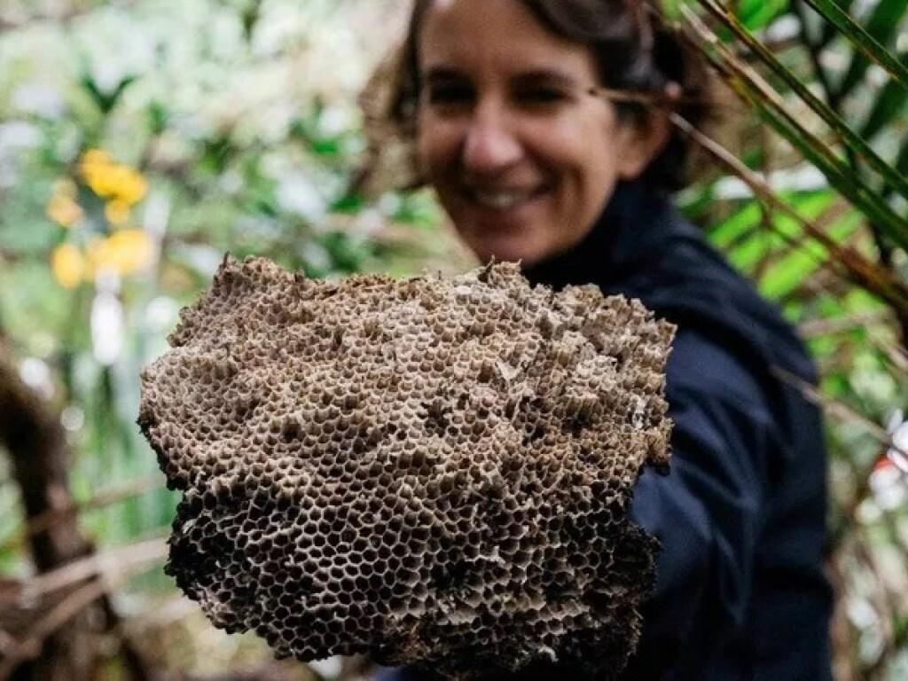 осиное гнездо в Новой Зеландии