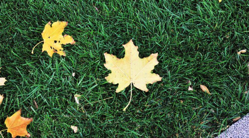 осень лист