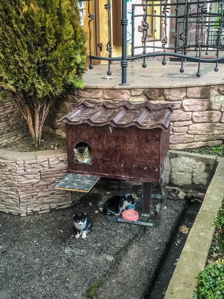 домик для котов в Никополе
