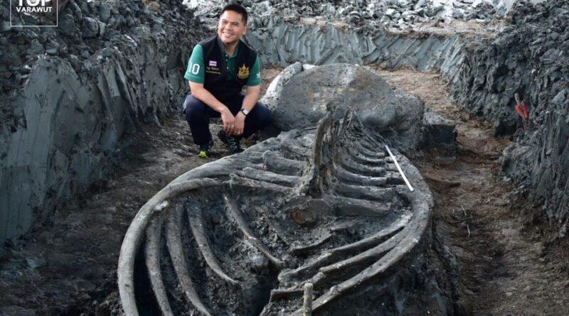окаменелости кита