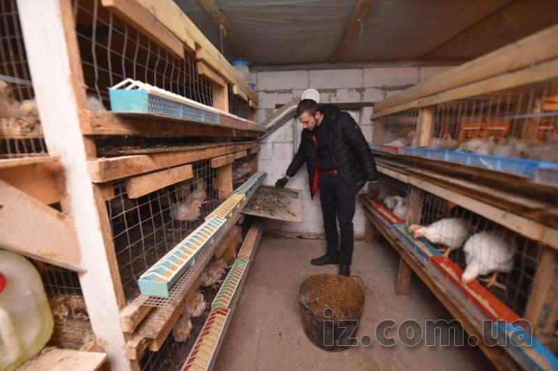родина фермерів_кури