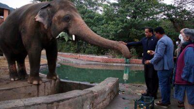 слон Кааван