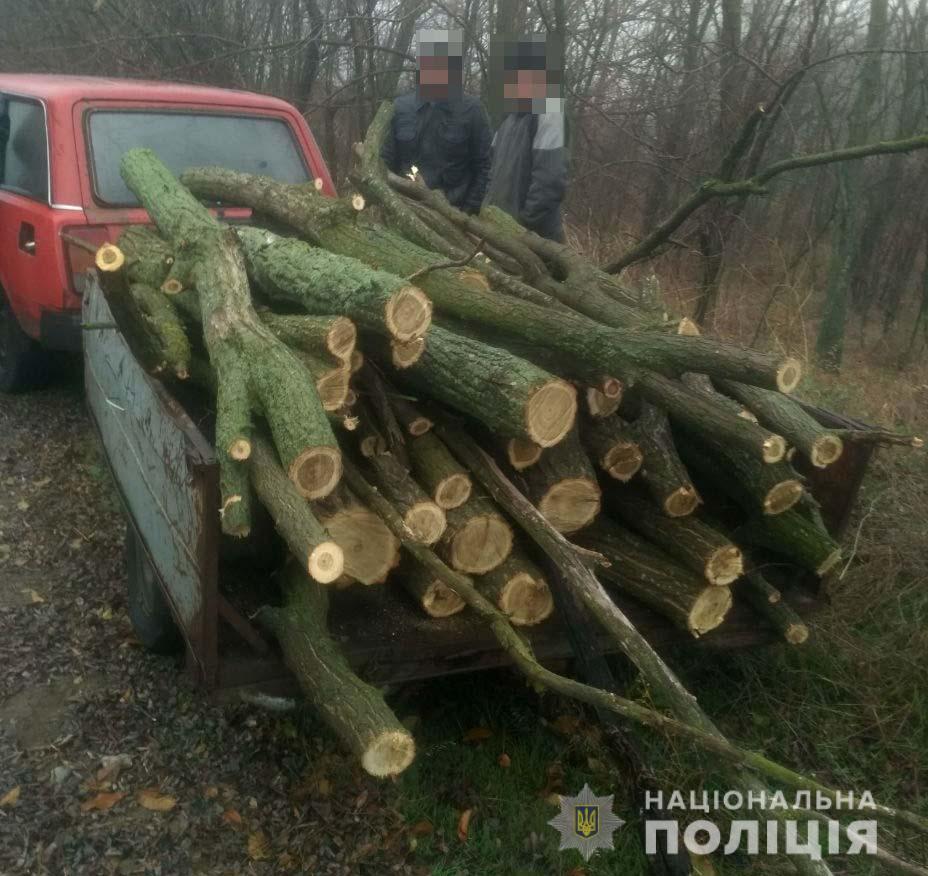 вирубка лісу_Криничанський район