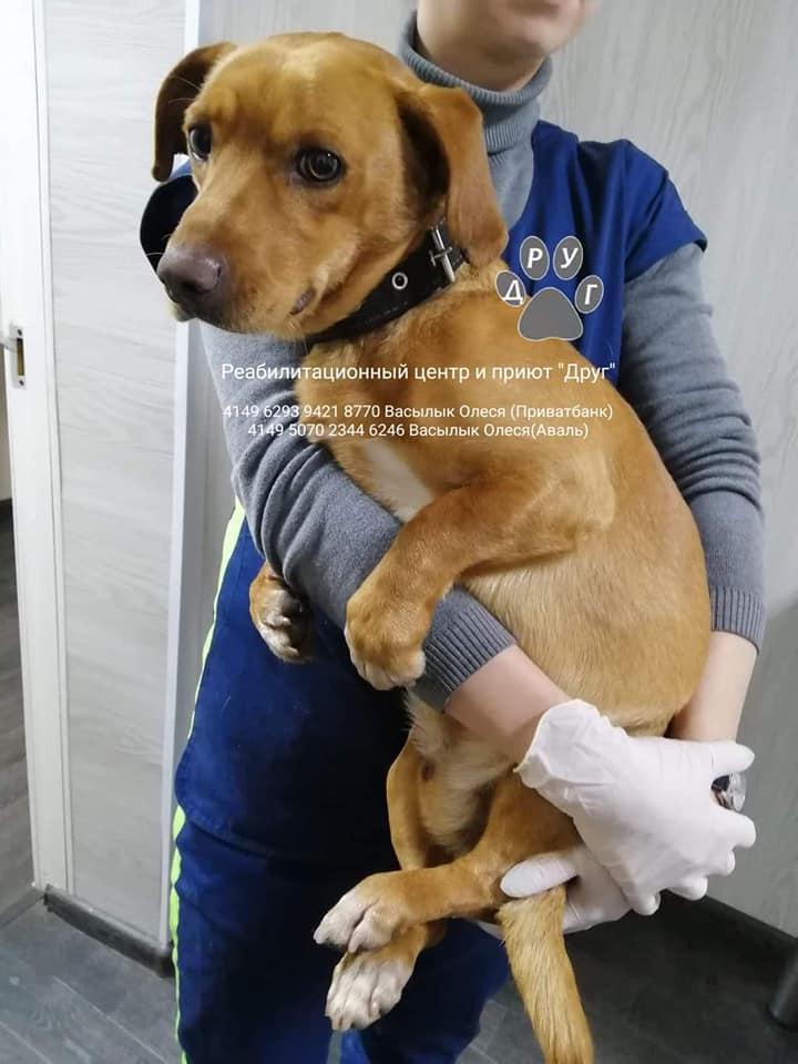 собака Бибер_Днепр