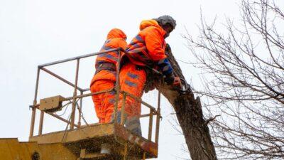 У Дніпрі продовжують обрізати та видаляти аварійні дерева (фото)