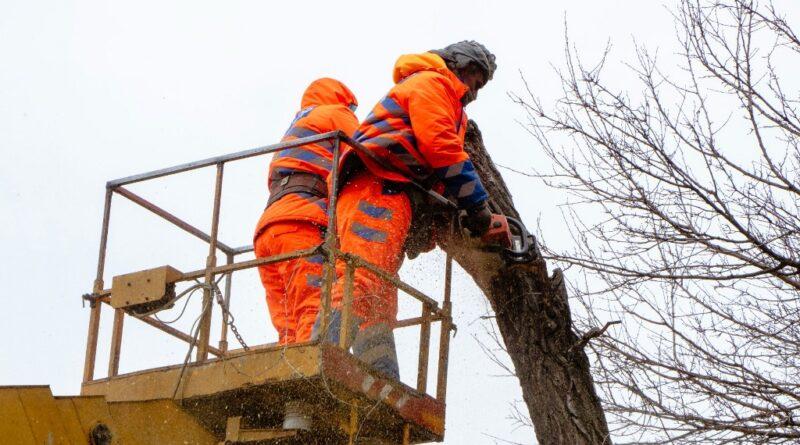 аварійні дерева_Дніпро