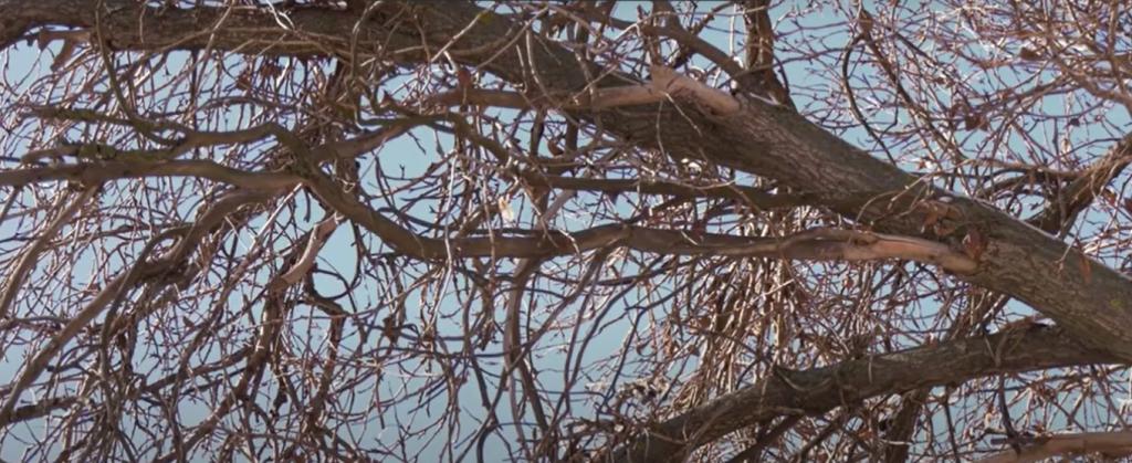 дерева_Дніпро