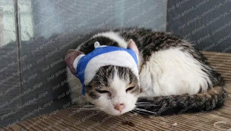 кошка Даша_Днепр