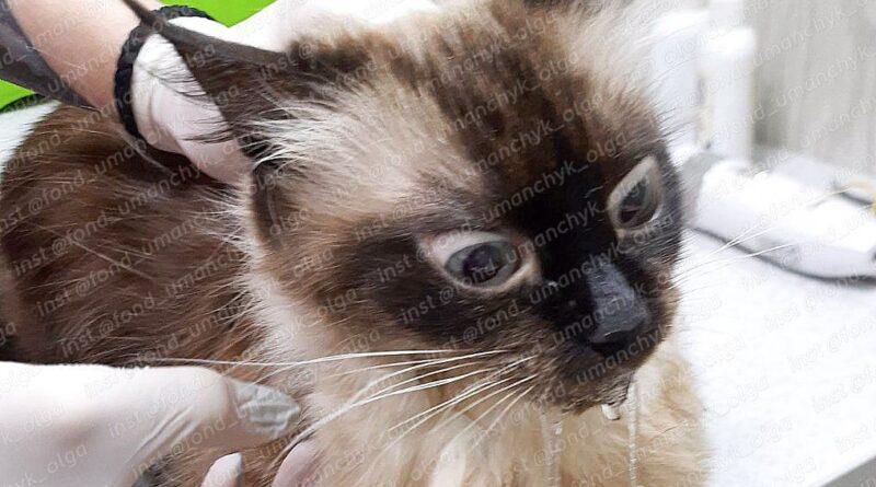 кошка Нора_Днепр