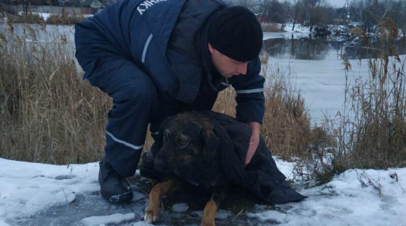 надзвичайники врятували собаку_Дніпро