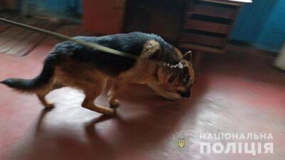 На Дніпропетровщині службовий пес допоміг затримати вбивцю