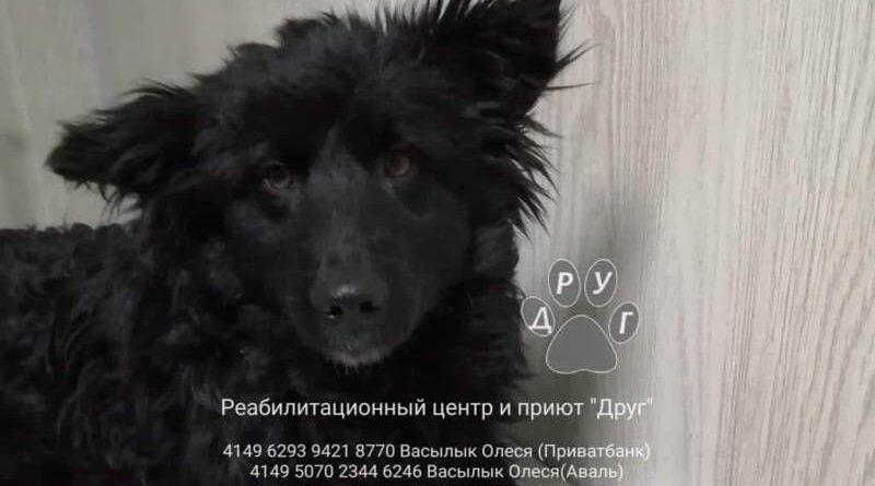 собака Шон_приют Друг