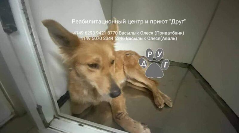 собака Ундина_приют Друг