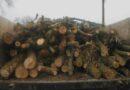 вирубка лісу_Царичанський район