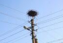Аист гнездо