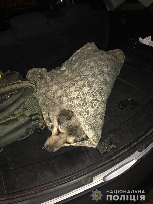 Кам`янське_травмована собака